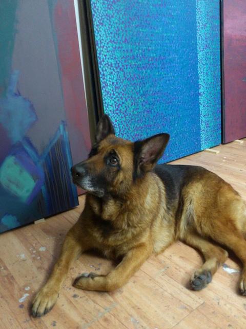 Artist's dog in contemporary artist studio